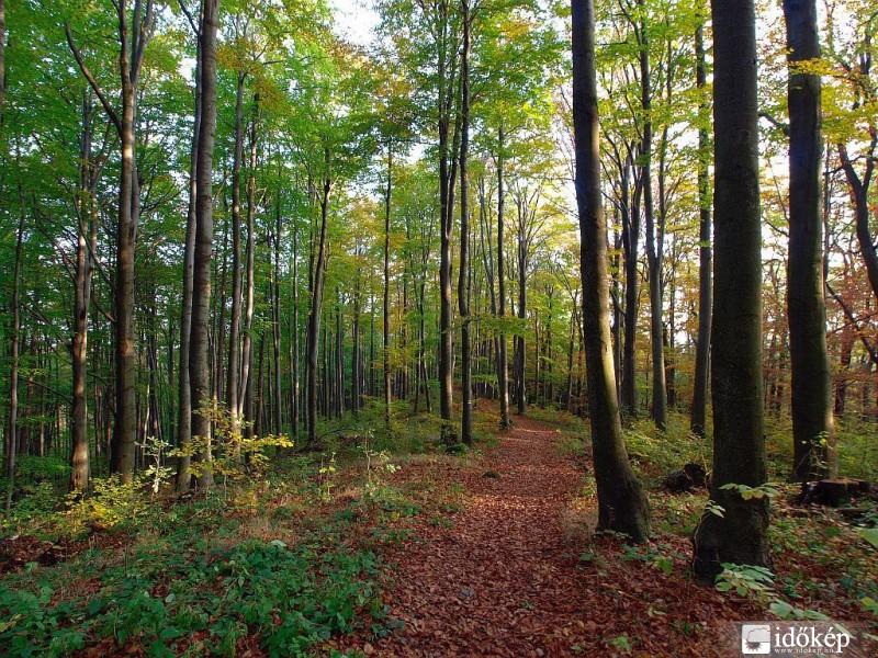 Pilisi séta októberben