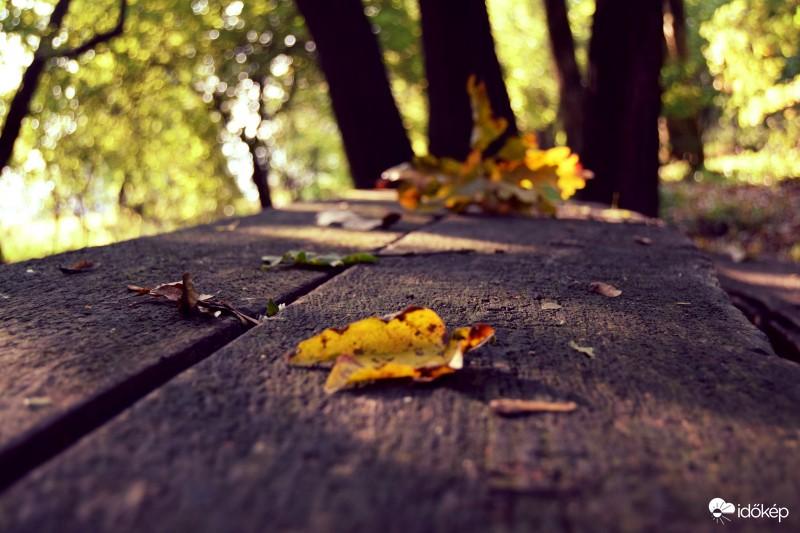 Enyhe őszi napok