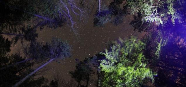 Mesebeli éj az erdőben