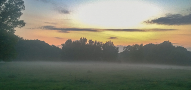 Ködös hajnal az Alföldön