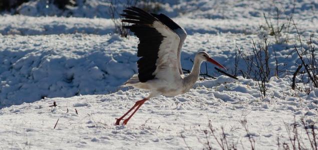 Itthon tölti a telet ez a fehér gólya