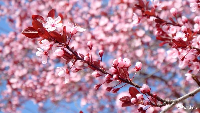 Kellemes tavaszi idővel búcsúzik a március